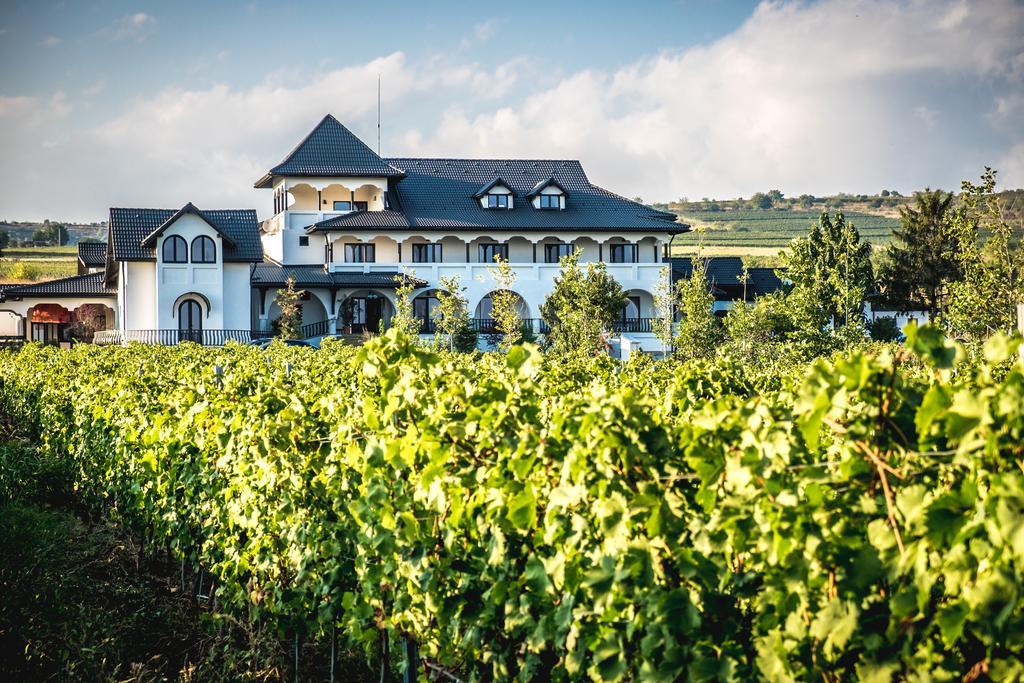 Vizită cu degustarea a 5 vinuri la Conacul din Ceptura, plimbare prin vie...