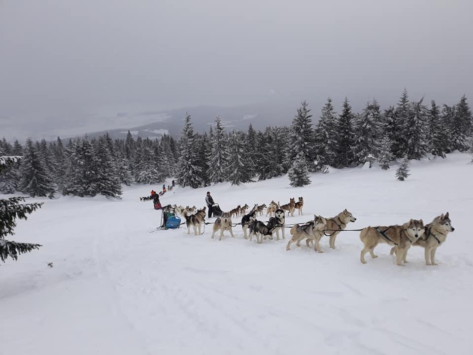 Tură cu sania trasă de câini în Munții Harghitei, în 3 variante, de la...