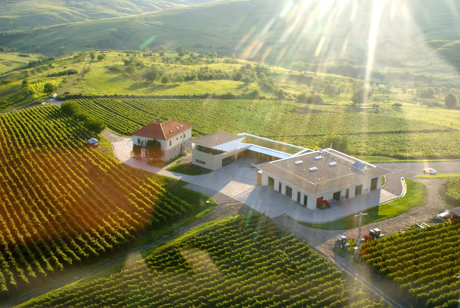 Excursie la cramele din Dealu Mare, degustări de vinuri premium, variantele...