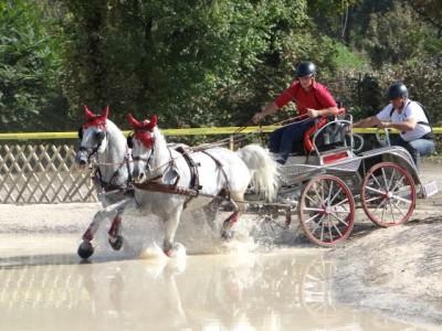De Revelion, în Covasna: concurs de trăsuri, plimbări cu sania, vizită la pălincie de lux, degustări de pastrame nobile, cursuri de călărie. Variantele de 5 sau 4 zile, cu 3 ospețe pe zi, gastronomie tradițională. Palincă la infinit!