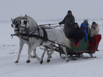 Vacanță de Revelion la o fermă de echitație în Covasna: gazdele pun la bătaie ferma, bucătăria și activitățile ecvestre, oaspeții își fac singuri de mâncare. Concurs de trăsuri, plimbări cu sania, cursuri de călărie. 4 nopți pentru grup de 14-16 prieteni