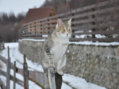 Aventură de 3-6 zile în Munții Făgăraș: răsfăț în jacuzzi, vizită la ferme, plimbare călare, ospăț cu pește proaspăt și cu vită de rasă nobilă! Te invită Sibiul!