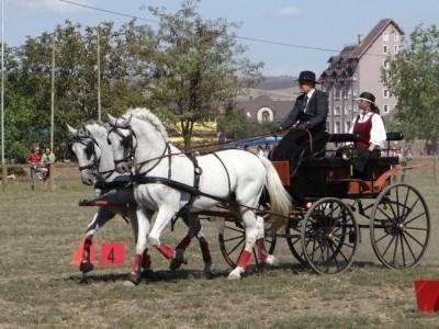 Experiență premium în 2 județe: răsfăț la piscină și SPA în hotel de lux în Brașov, degustare de vinuri în centrul istoric, apoi vizită la pălincie de lux + lecții de călărie, plimbare cu trăsura și un prânz tradițional secuiesc în Covasna!