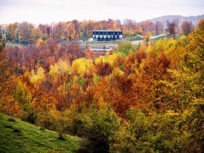 Plimbare călare în natură, relaxare în jacuzzi și în camera salină, cu 3 mese generoase pe zi, din produse locale, într-o aventură în munții Dâmboviței, variantele de 3 sau 4 zile.