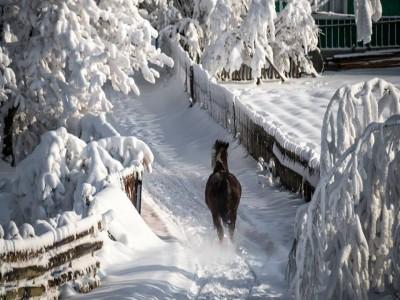 Revelion în Bucovina, la Sucevița: 5 zile cu 4 nopți, demipensiune, Cină Festivă, lecție de ceramică sacră la Marginea, petrecere cu taraf local și un mare ospăț în aer liber, gastronomie bucovineană de iarnă!