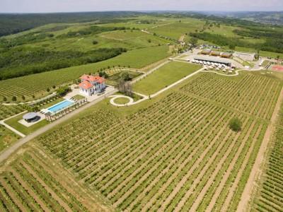 Excursie cu degustare de vinuri premium la crama Avincis și tur al domeniului + o cină rafinată, cu o noapte de cazare lux și mic dejun. Sau varianta supremă: două nopți / două crame + SPA . Te invită Oltenia!