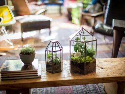 """Ateliere florale interactive: """"Coșul tău cu bucurii de martie"""" + """"Un microunivers, propriul tău terariu"""" + """"Atletul naturii - Terarii cu plante suculente"""""""