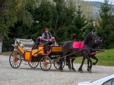 Călărie în natură sau în manej la Pănicel, Brașov. Variantele cu 2-4 nopți de cazare, 2 mese pe zi și lecții de echitație pentru începători. Instructor răbdător, mereu aproape.