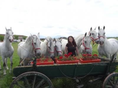 Te invită Covasna -  Picnic în natură și concurs de trăsuri conduse de oaspeții, lecții de călărie, plimbare cu trăsura. Variantele cu sau fără cazare.