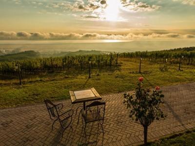 Terapie cu natură și vin la Drăgășani: vizită la Muzeul Vinului, turul cramei, plimbare prin vie, culcuș în pensiune de lux. Variantele 1-3 nopți cu 2 mese pe zi. În varianta supremă: acces la Forest SPA și un masaj. Te invită Oltenia!