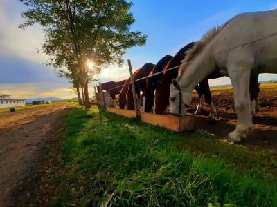Revelion în Transilvania, la o fermă de echitație din Covasna: concurs de trăsuri trase de oaspeți, plimbări cu sania/ trăsura, baie la ciubăr, cursuri de călărie + 4 nopți cu demipensiune.