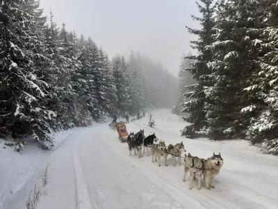 Tură cu sania trasă de câini în Munții Harghitei, în 3 variante, de la cea simplă, la cea supremă. Ai alături instructor priceput, brioșe calde, ceai și un păhăruț de pălincă!