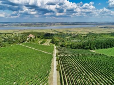 Vizite la 2 crame premium, Bauer și Știrbey din Drăgășani, cu degustarea a 10 vinuri de autor + varianta cu degustare a 10 vinuri și un picnic boieresc în vie. Vezi ce conține papornița oltenească de picnic. Te invită Oltenia!